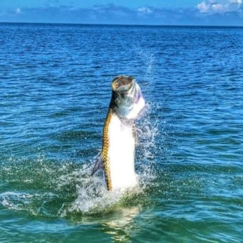 Florida Keys Fly Fishing tarpon jumping