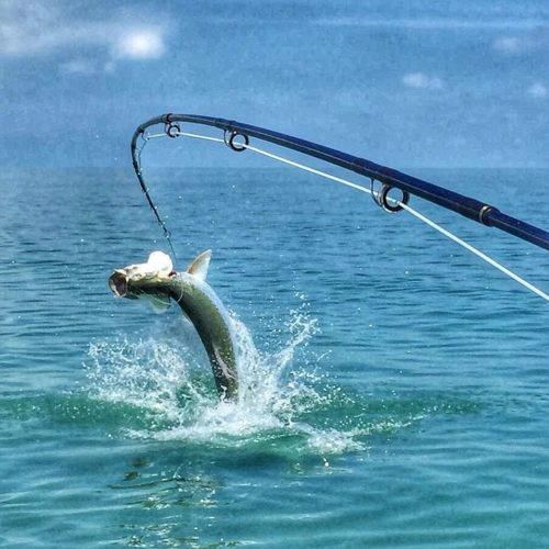 tarpon on fly in the Marquesas Keys
