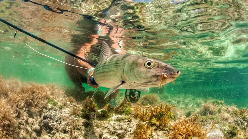 Fly fishing for bonefish in Key West