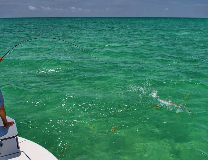 Key West fly fishing guide for tarpon