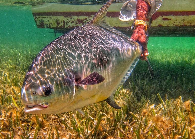 fly fishing for permit in the Marquesas Keys